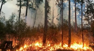 Breathing Wildfire Air Can Impact Sperm and Brain